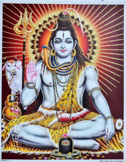 Shiva guld gimmer