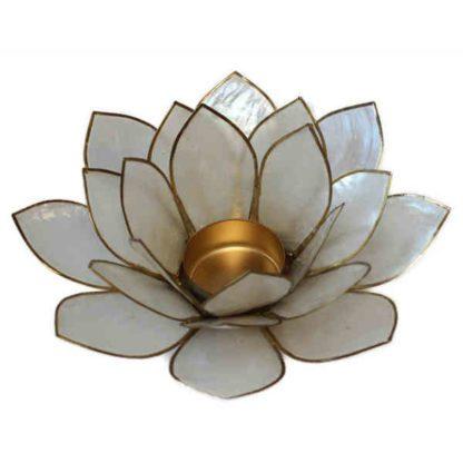 Hvid lotus